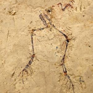 Taller de paleontologia científica